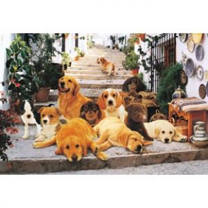 HM100-240 階梯上的小狗們拼圖1000片