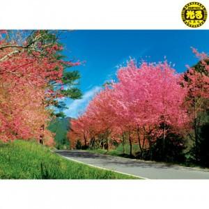 K25-005 台灣之美 台中和平武陵農場 520片夜光拼圖